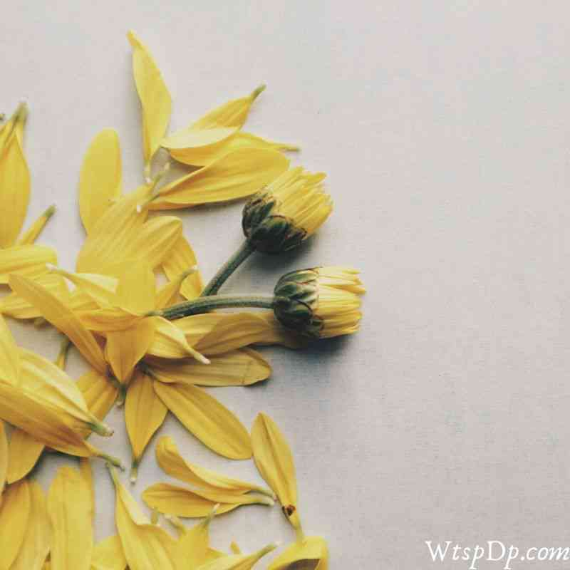 Yellow flower image for dp