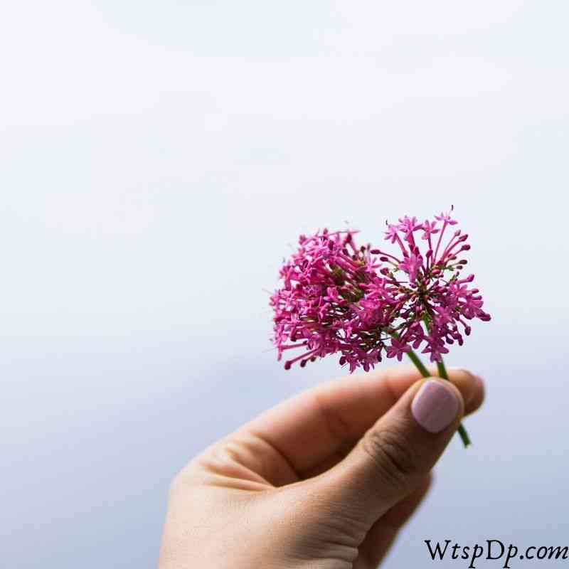Beautiful flower in hand image for whatsapp dp