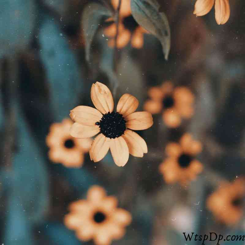 Flower image for whatsapp profile picture